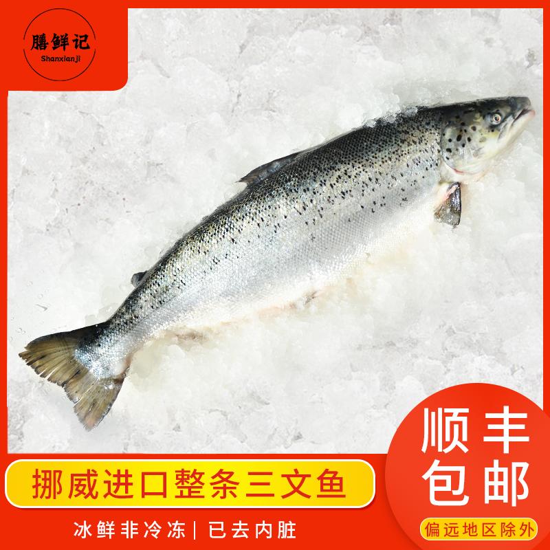 挪威进口三文鱼整条13-12斤冰鲜非冷冻三文鱼中段刺身寿司生鱼片