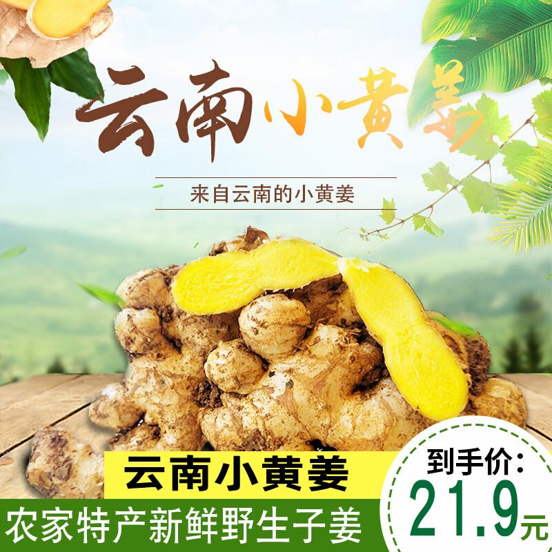 云南农家新鲜云南小黄姜非老姜土姜云南包邮5斤装非罗平干姜10
