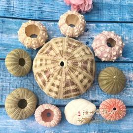 天然粉色珍珠海胆装饰贝壳海螺珊瑚海星地台鱼缸摆设DIY标本收藏