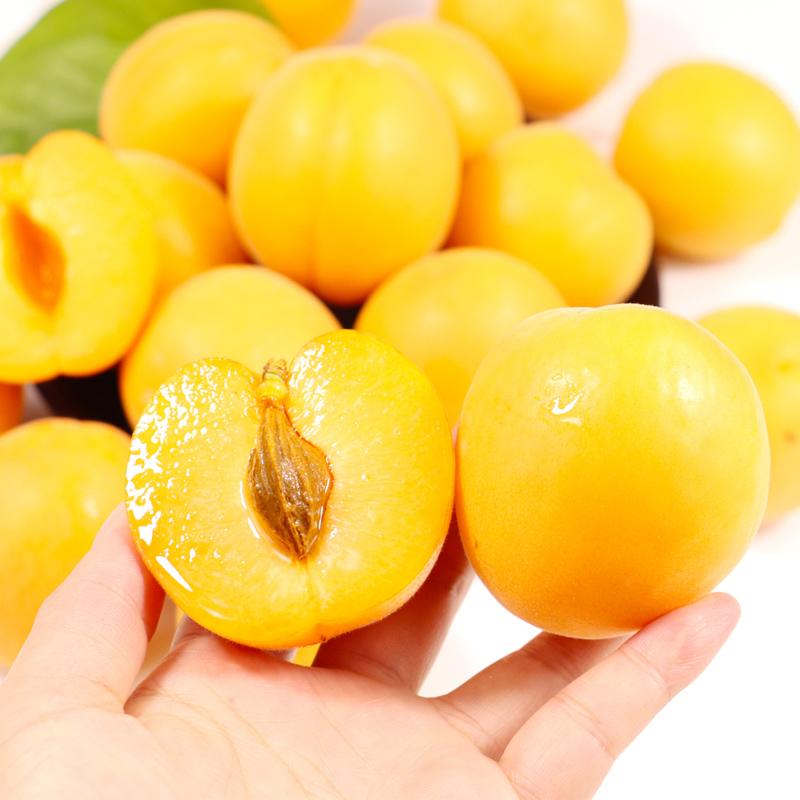 山西运城金太阳杏新鲜水果金太阳大黄杏5斤果农家大黄杏子好吃的