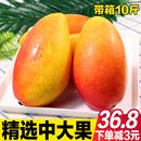 海南贵妃芒果 新鲜水果带箱10斤包邮当季现摘现发红金龙小台农大