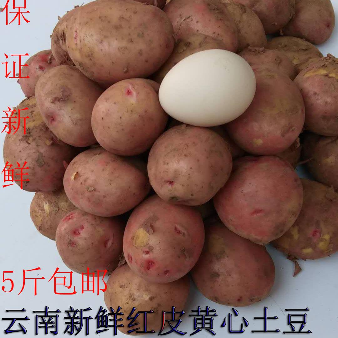 云南新鲜红皮黄心小土豆5斤包邮农家自种小土豆新鲜蔬菜云南土豆