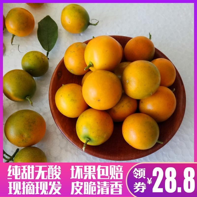 广西桂林阳朔脆皮金桔5斤青皮小橘子滑皮金桔子新鲜水果现摘包邮
