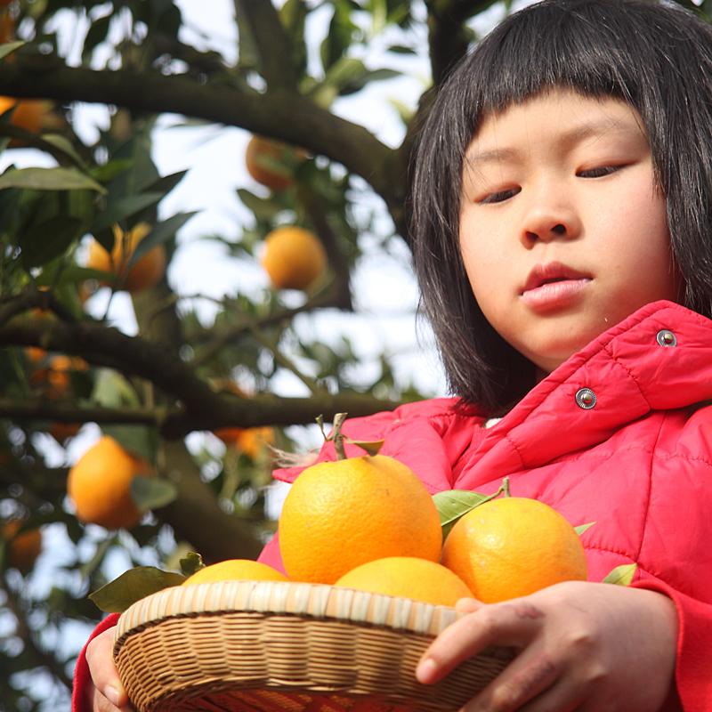 懷化甜橙子芷江麻陽黔陽冰糖橙新鮮孕婦水果柑橘農戶自產自銷包郵
