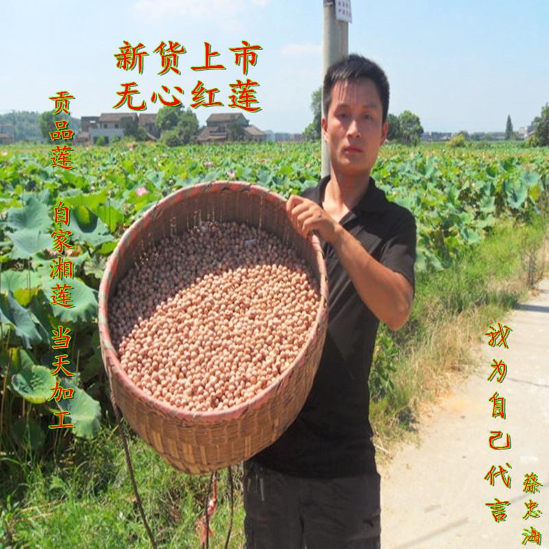 17年新莲湖南特产湘潭粉糯易煮无硫去心 无芯红莲子 干货500g包邮