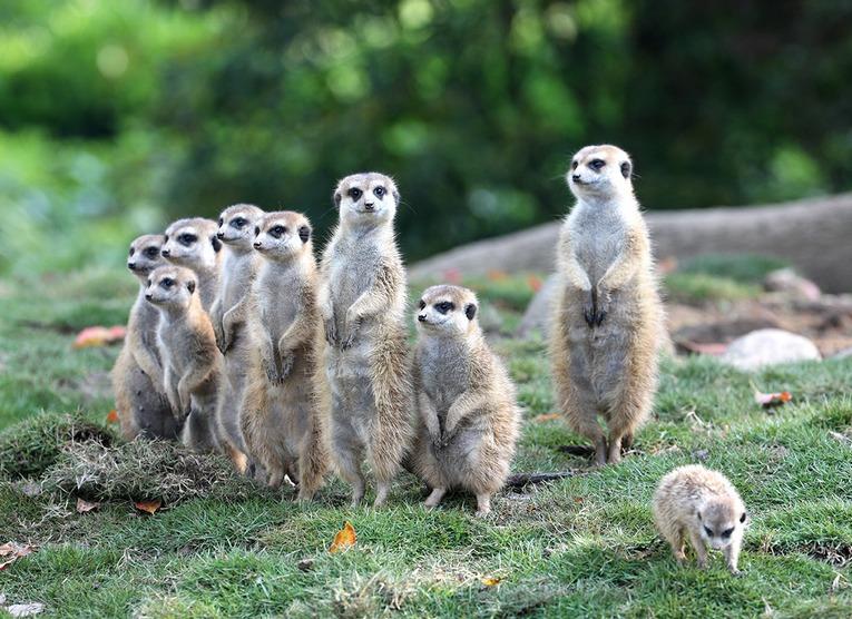 首页 资讯 网购优惠 丽江天行旅游优惠 上海野生动物园大门票优惠票价