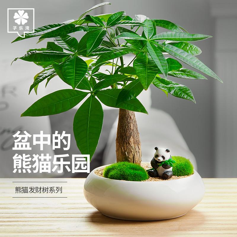 发财树盆栽绿植植物办公室客厅室内盆景好养小招财树金钱树富贵竹