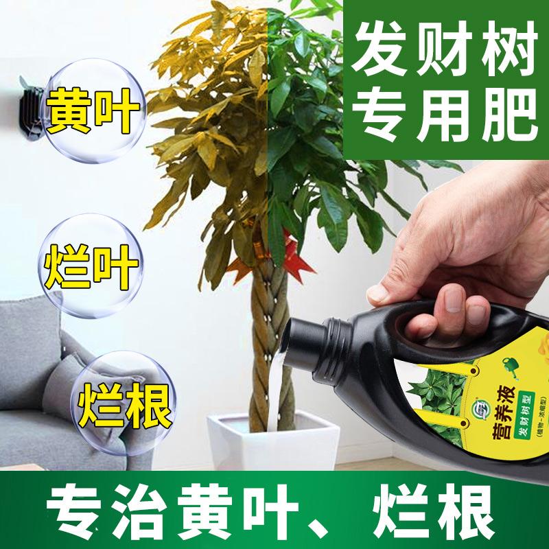 发财树肥料专用肥盆栽营养液花肥料家用金钱树土水培植物通用室内