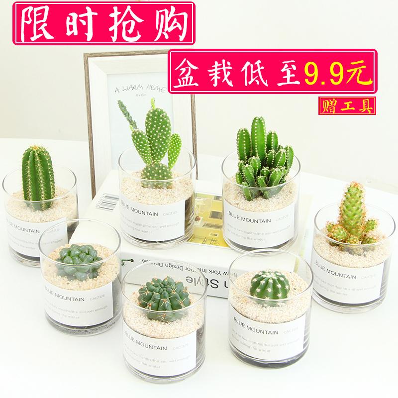 多肉植物仙人掌类小盆栽室内桌面好养耐活开花仙人球可爱绿植玉露
