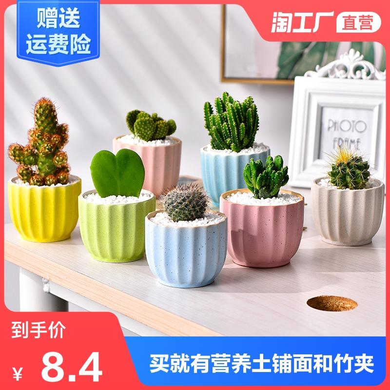 多肉植物仙人掌盆栽室内办公桌仙人球盆栽开花室内可爱桌面绿植