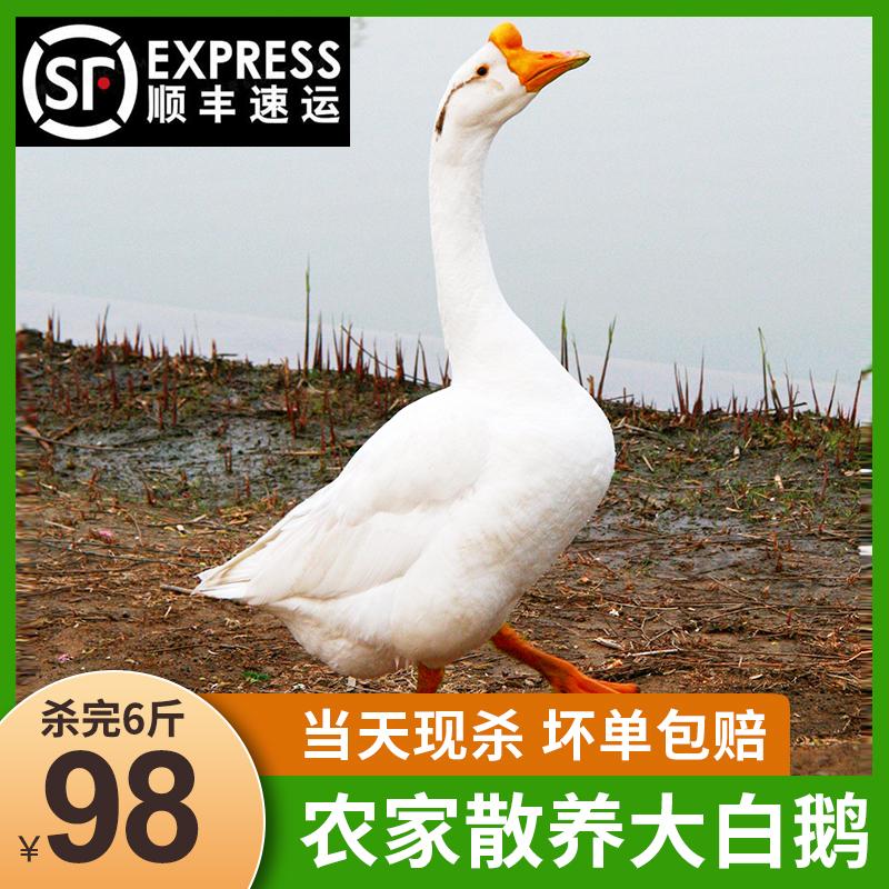 速绿 现杀大白鹅鹅肉 净重6斤