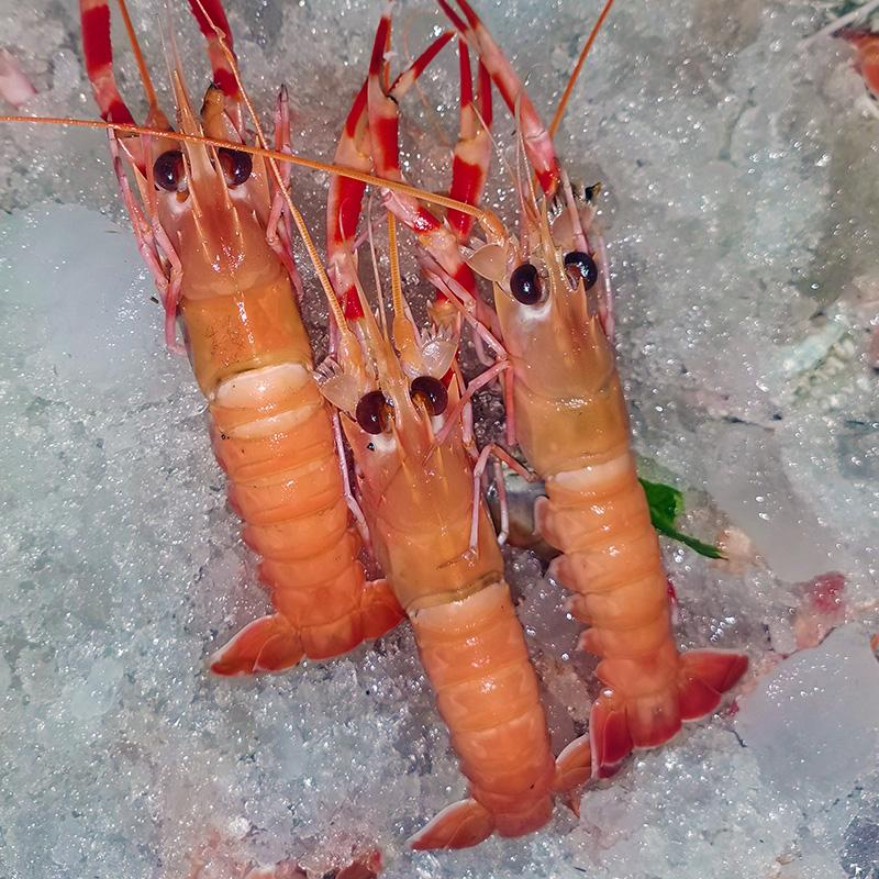 果力乐 胶东新鲜刺身级海龙虾 2斤