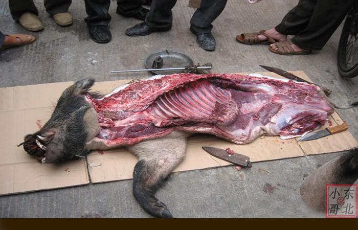黑猪新鲜现杀野黄油野猪肉长白山新鲜正宗野猪肉猪肉霉图片