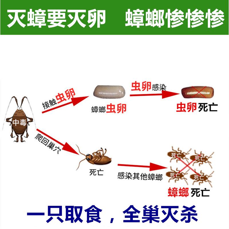杀蟑螂药粉胶饵蟑螂屋无毒全窝端强力灭蟑螂克星家用厨房薬灭蟑清