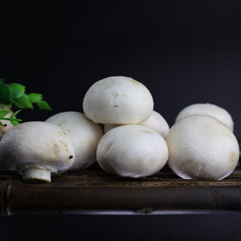 佰卓 新鲜双孢菇口蘑 500g