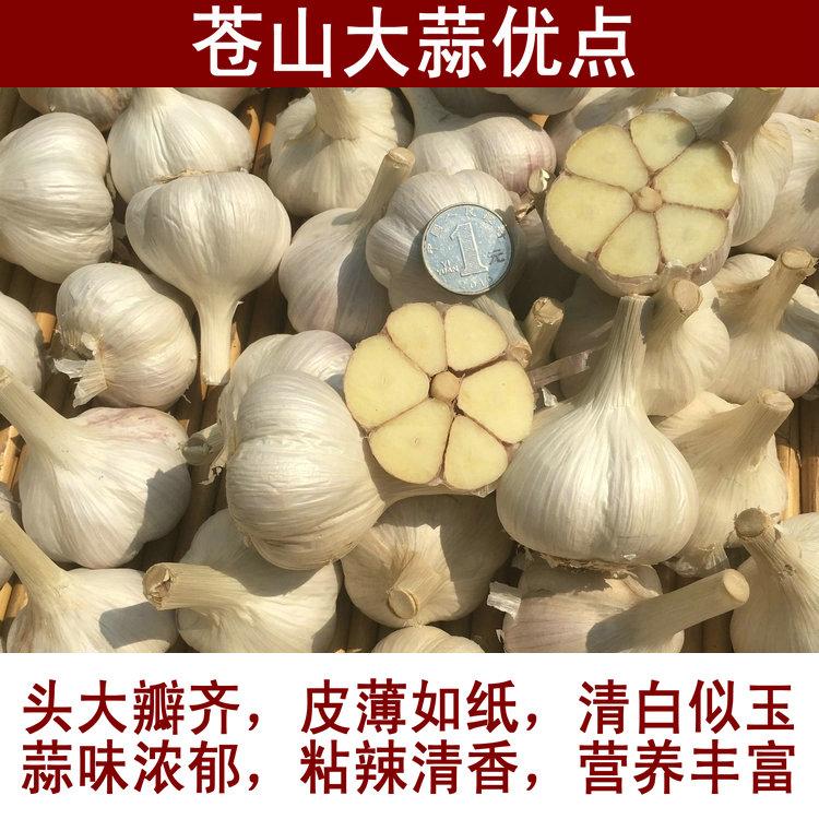2019年新鲜大蒜头干蒜山东苍山白皮大蒜低价干蒜农家自种特产 5斤