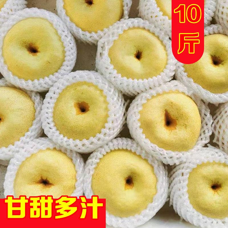 白酥梨砀山梨子青梨整箱10斤新鲜水果5斤百年梨树非皇冠梨包邮