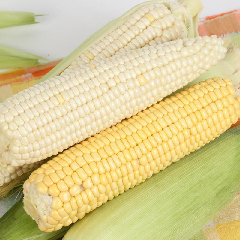 现摘新鲜特价糯玉米5斤甜糯玉米棒黏苞米粗粮水果蔬菜整箱黑玉米