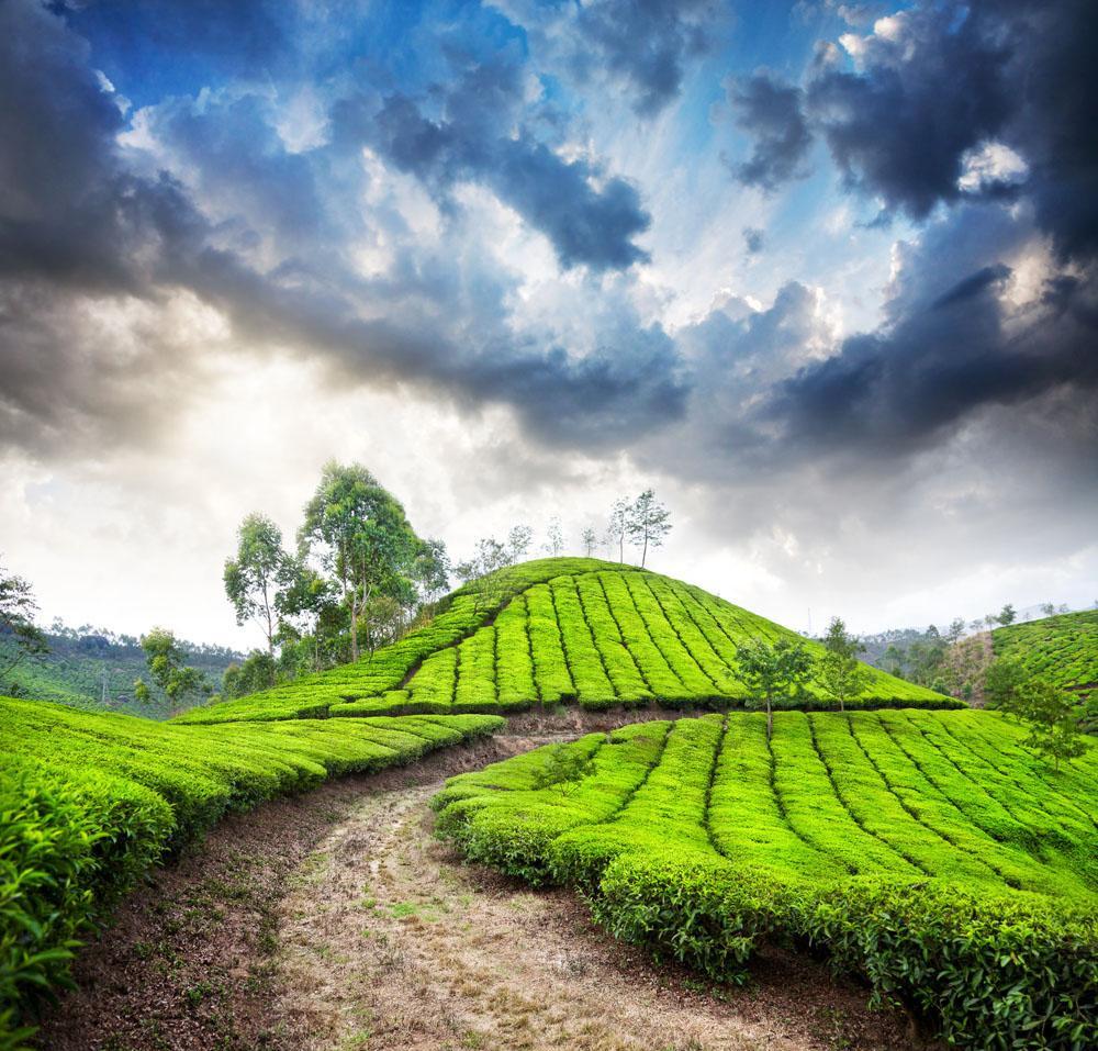 年青人喜好的绿茶,够清爽,够诱人