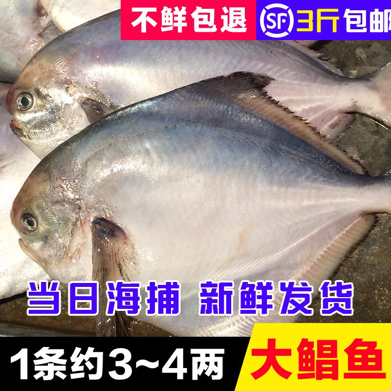 海捕野生新鲜鲳鱼 扁鱼 平鱼 3-4两/条 鲜活海鲜宝宝辅食500g_7折现价
