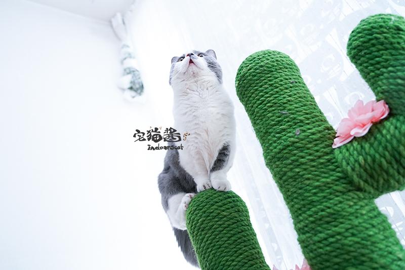 House cat sauce Vetreska not card desert green cactus cat climbing ...