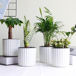绿科秀水培植物绿箩幸福树盆栽办公室桌面绿植发财树含瓶净化空气