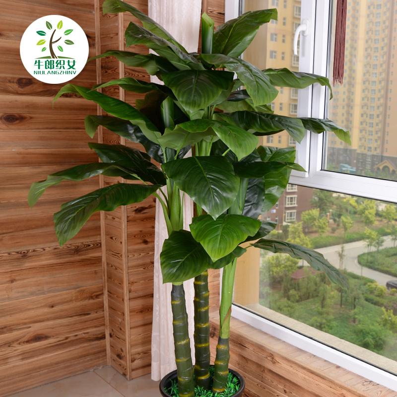 Цвет: 1.9 м номинальной три Зеленый гигант (не включены)