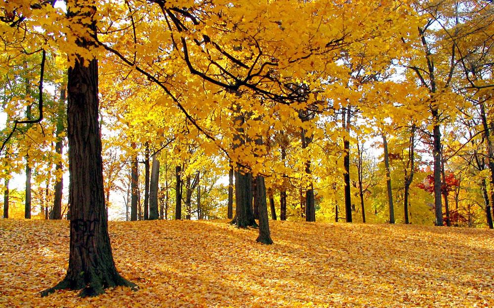壁纸 风景 森林 桌面 1000_625