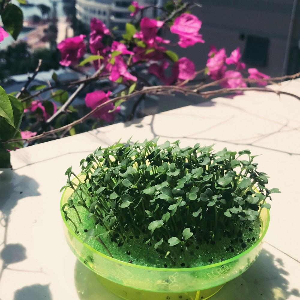 儿童种花草植物小盆栽科学实验 男女孩学生幼儿园回礼物