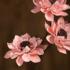 莲花干花束文艺天然艺术干花真花莲蓬干花客厅装饰禅意家居摆设