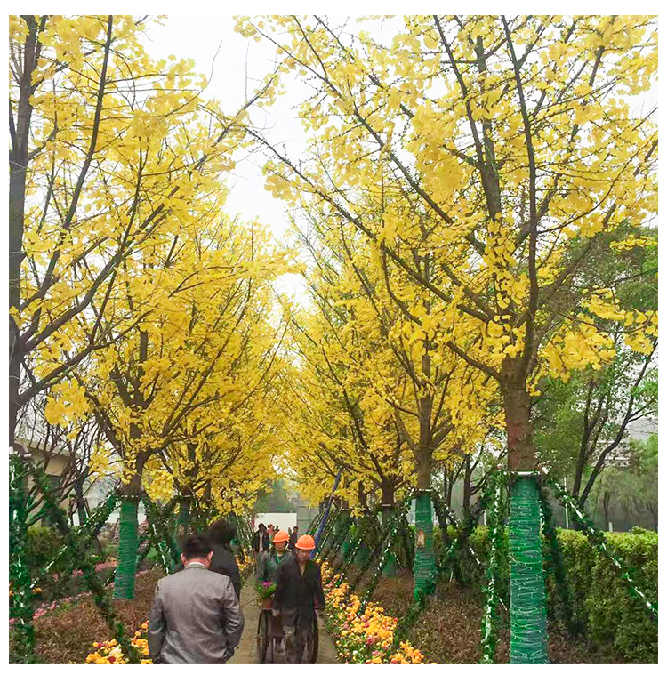 Simulation fake branches leaves simulation red maple leaves ginkgo leaves garden landscape leaves view decorative plant branches artificial trees