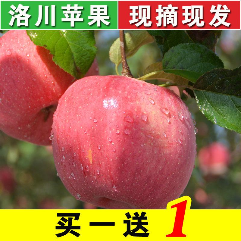 洛川苹果新鲜陕西红富士现摘水果毛重共5斤
