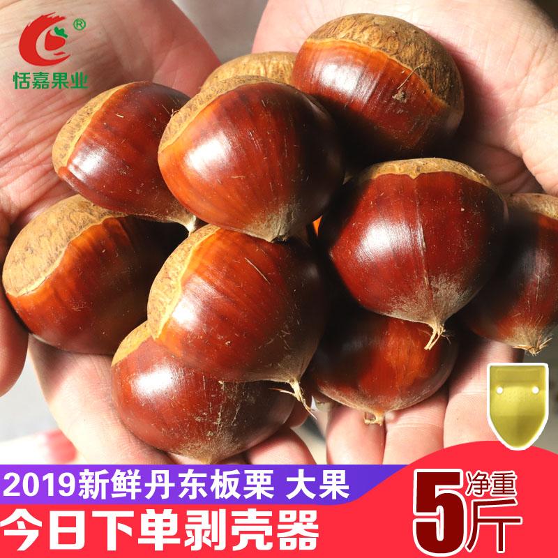 恬嘉果业 丹东新鲜生板栗 5斤