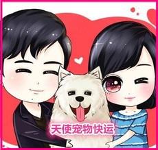 Любимчика консигнации в Ханчжоу/Чунцин/Чэнду/собака кошка авиационной