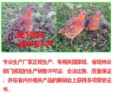 образец Мужские и женские бамбук курица