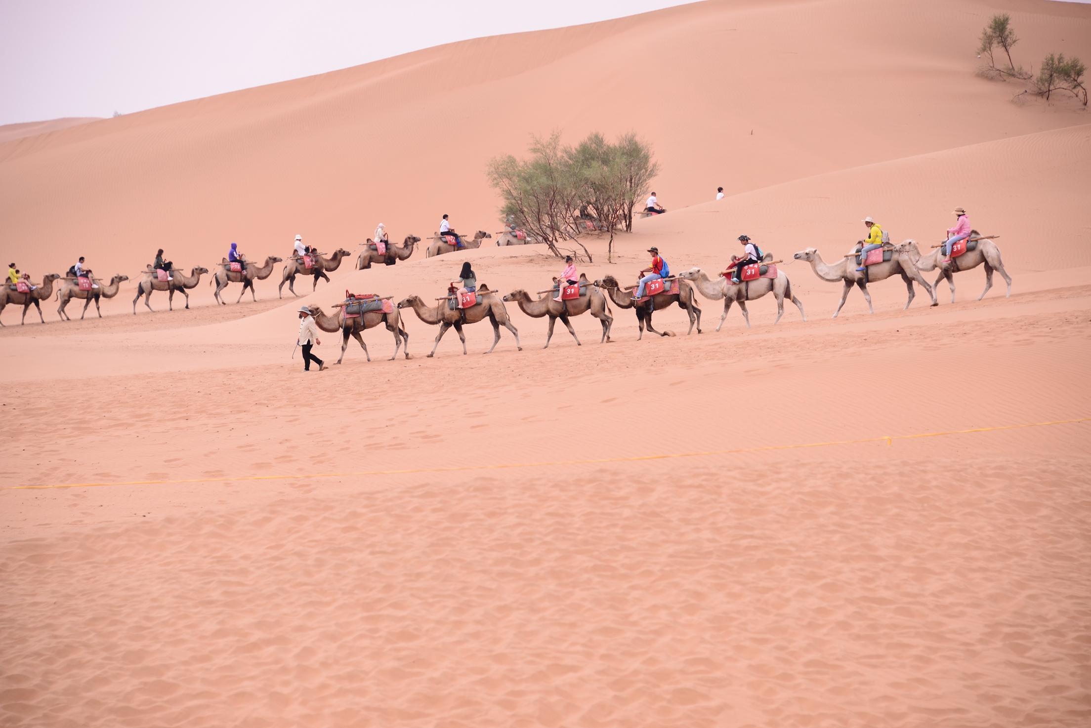 远远地,驼队承载着游客穿梭沙漠,视觉粗犷唯美.图片