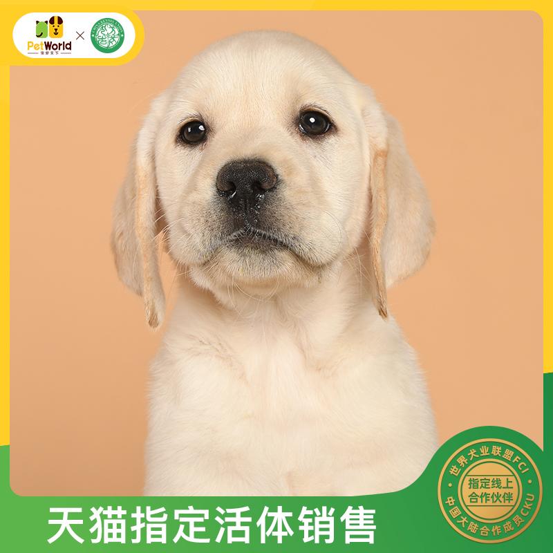 宠爱天下拉布拉多幼犬崽纯种狗狗宠物导盲犬黑白拉拉活体公母