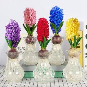 风信子种球大球水培套装四季易活室内花卉客厅阳台办公室桌面盆栽