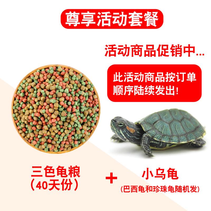 赠小乌龟:爬将军 三色龟粮 40天份