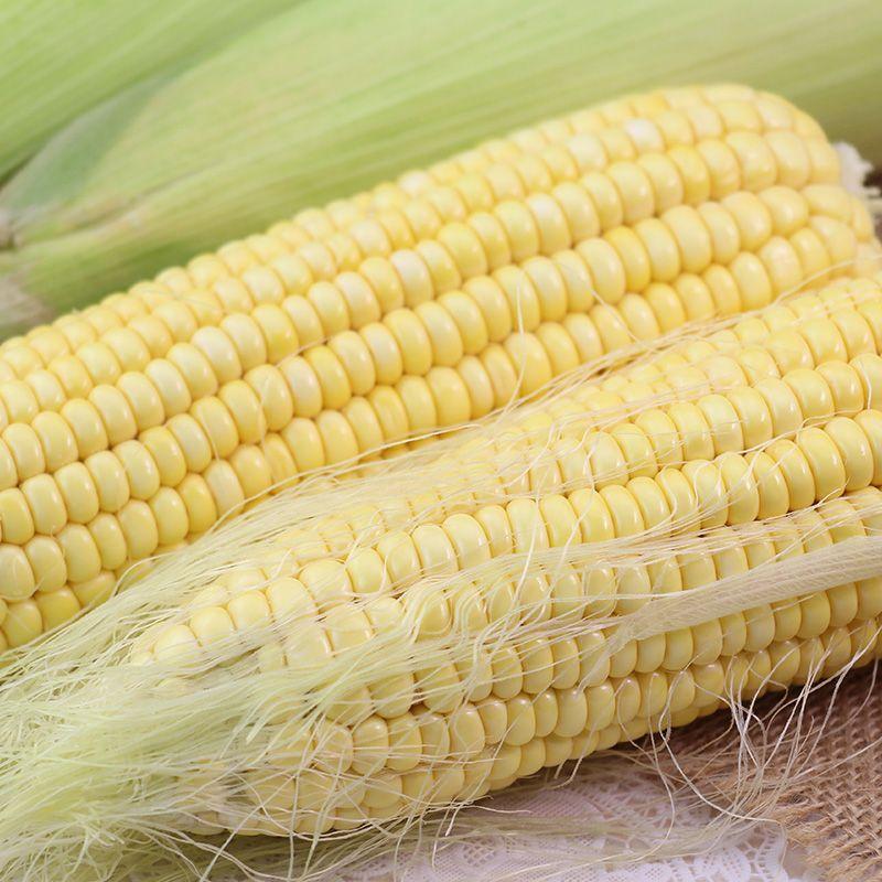 锦尚隆 新鲜东北 甜嫩黏黄白玉米 10棒约9斤