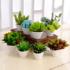 仿真多肉植物组合盆栽 假花仙人掌阳台办公桌装饰绿植小盆景摆设