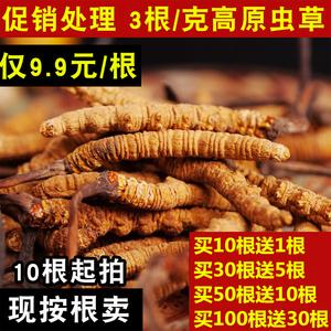 西藏那曲冬虫夏...