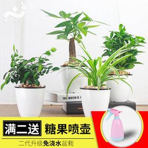 绿植水培植物