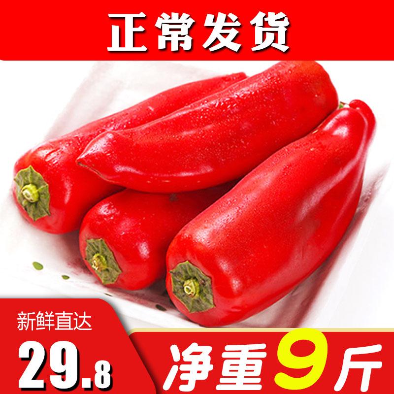 馨仙 新鲜大红辣椒 净重9斤