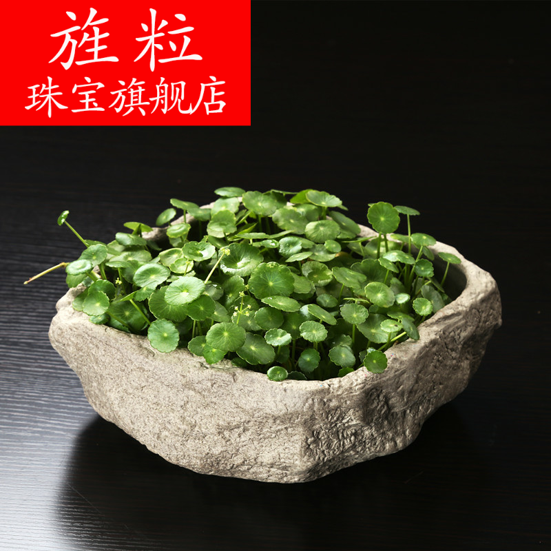 Continuous grain of daffodils grass cooper hydroponic flower pot water raise the imitation stone miniascape of creative ceramic bowl lotus pond lily money