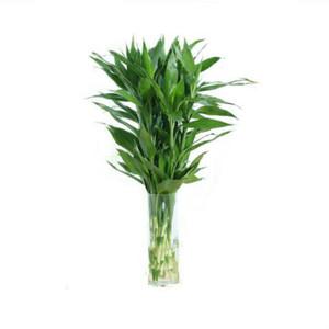 富贵竹观音竹大叶竹转运竹开运竹办公室花卉盆栽室内水培植物包邮