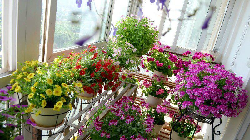 阳台│你是草花控吗?一样的阳台不样的景