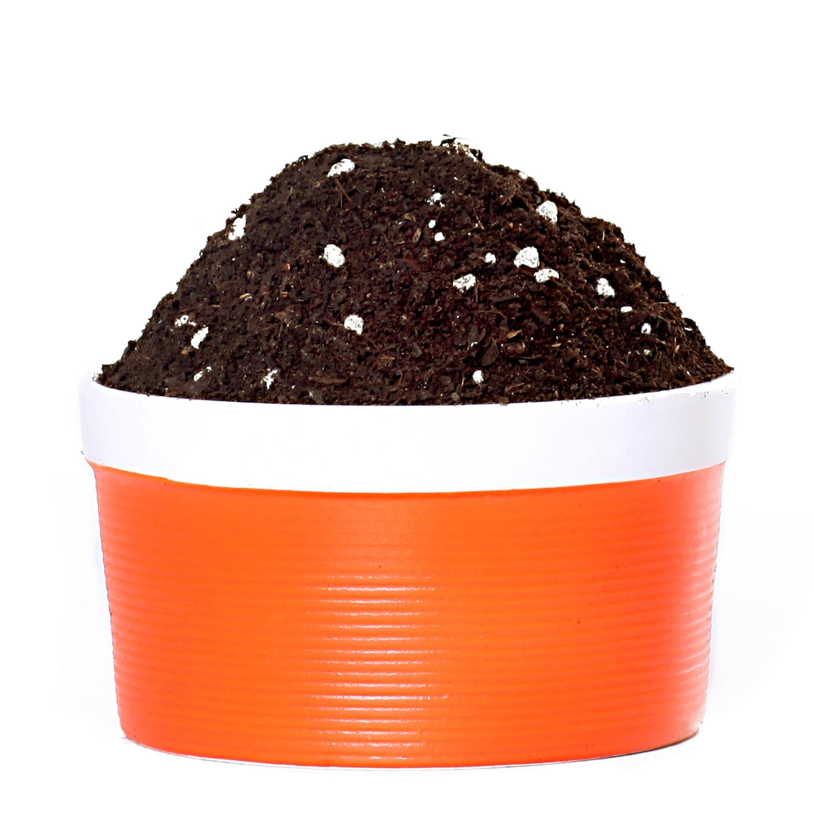 花土营养土种植土通用型多肉土多肉营养土绿萝专用土花泥土壤包邮-给呗网