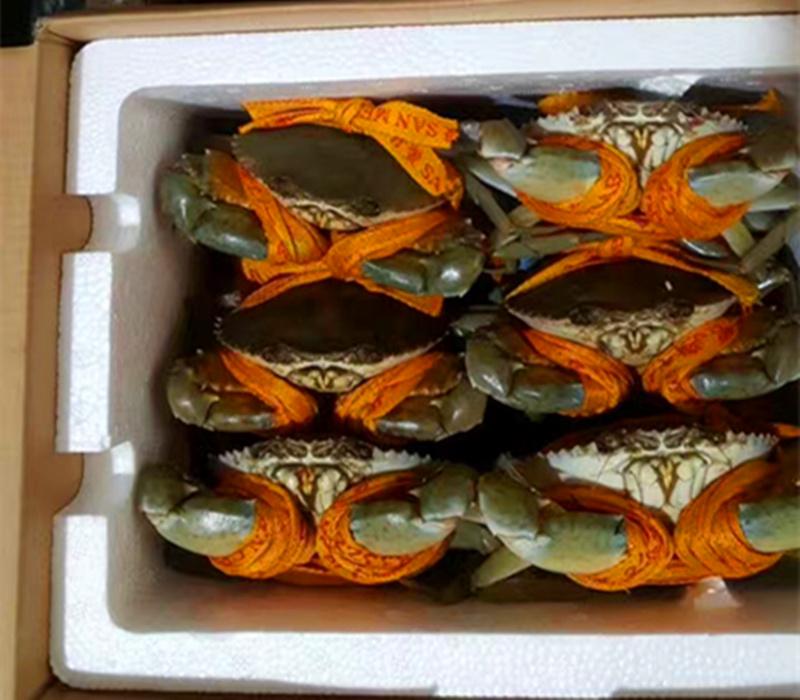Голубой краб San men blue crab