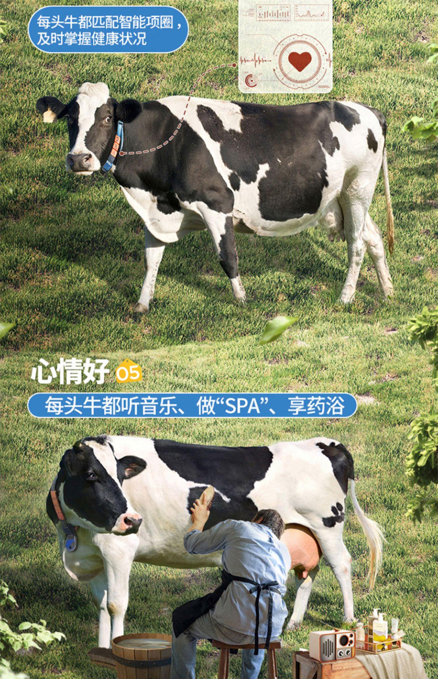 【认养一头牛】全脂纯牛奶250ml*24盒